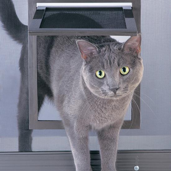 Kitty pass cat door