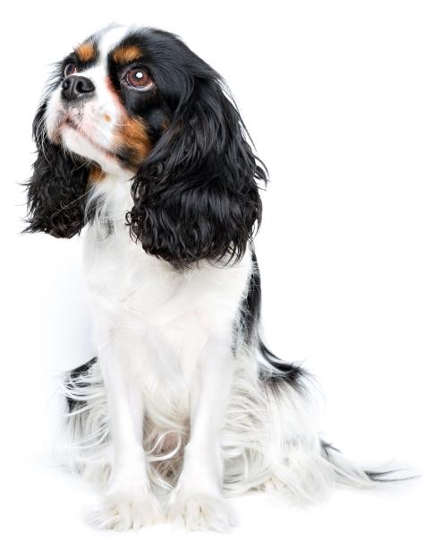 Agline - Wholesale Pet Supplies Adelaide