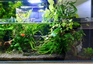 PetWorx Aquariums