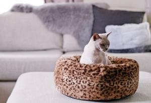 Snooza Luxury Beds