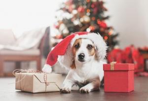 Christmas Toys & Treats